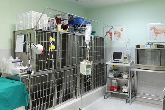 clínicas para mascotas cáceres