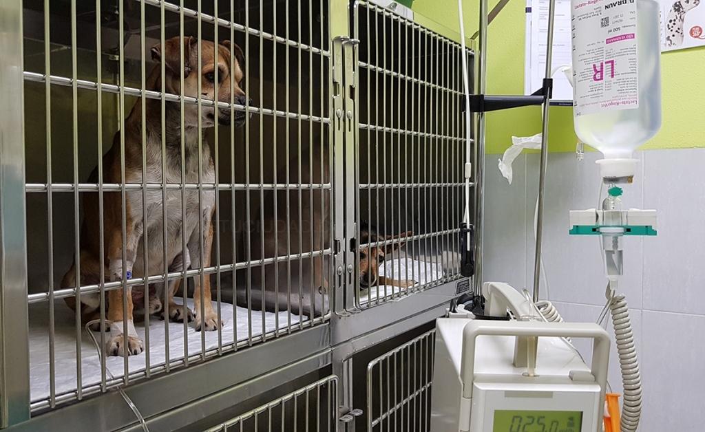 análisis de sangre para animales cáceres