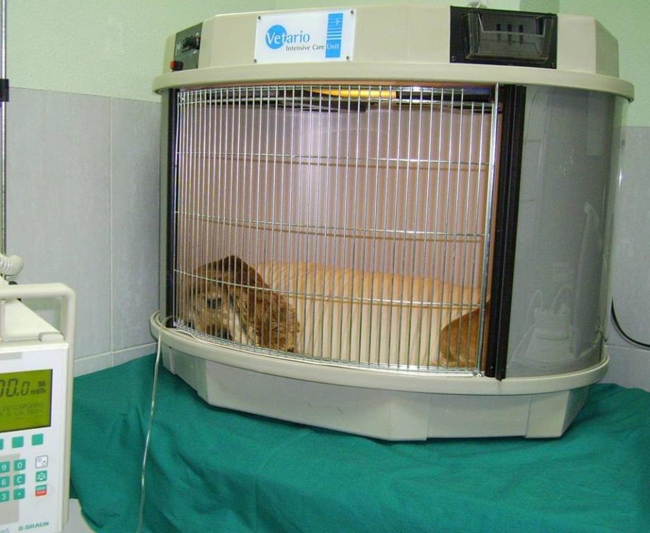 radiografías para perros y gatos cáceres