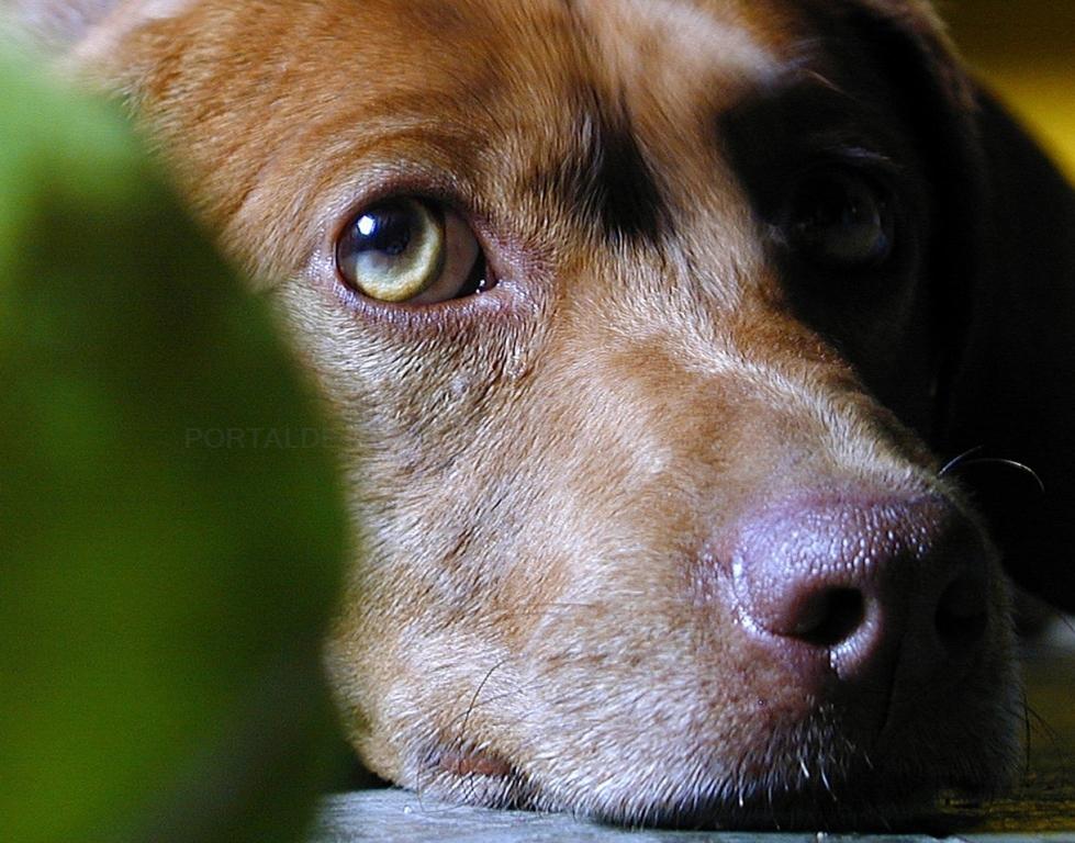 hospitalización para mascotas cáceres