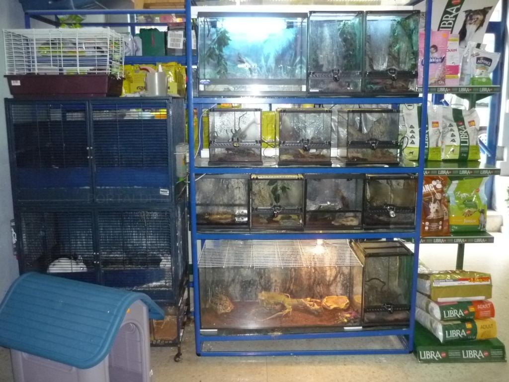clínicas veterinarias para gatos en cáceres