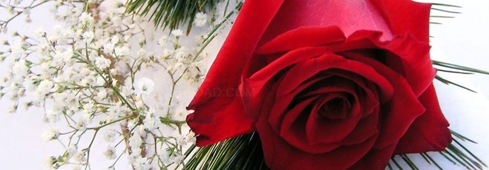 flores cortadas cáceres
