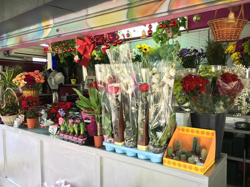 flores cáceres
