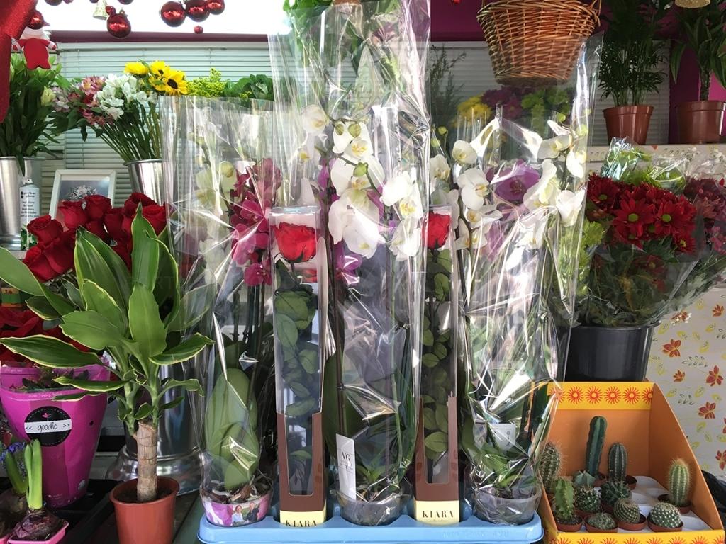 rosas preparadas cáceres