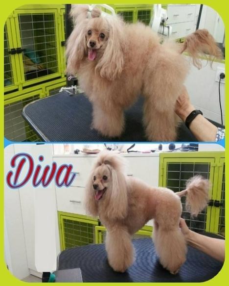 Cortar el pelo a perros en Cáceres
