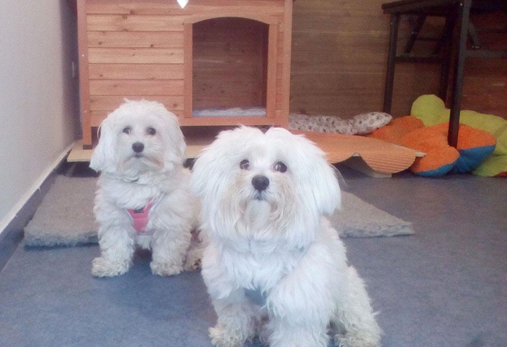 guarderías caninas cáceres