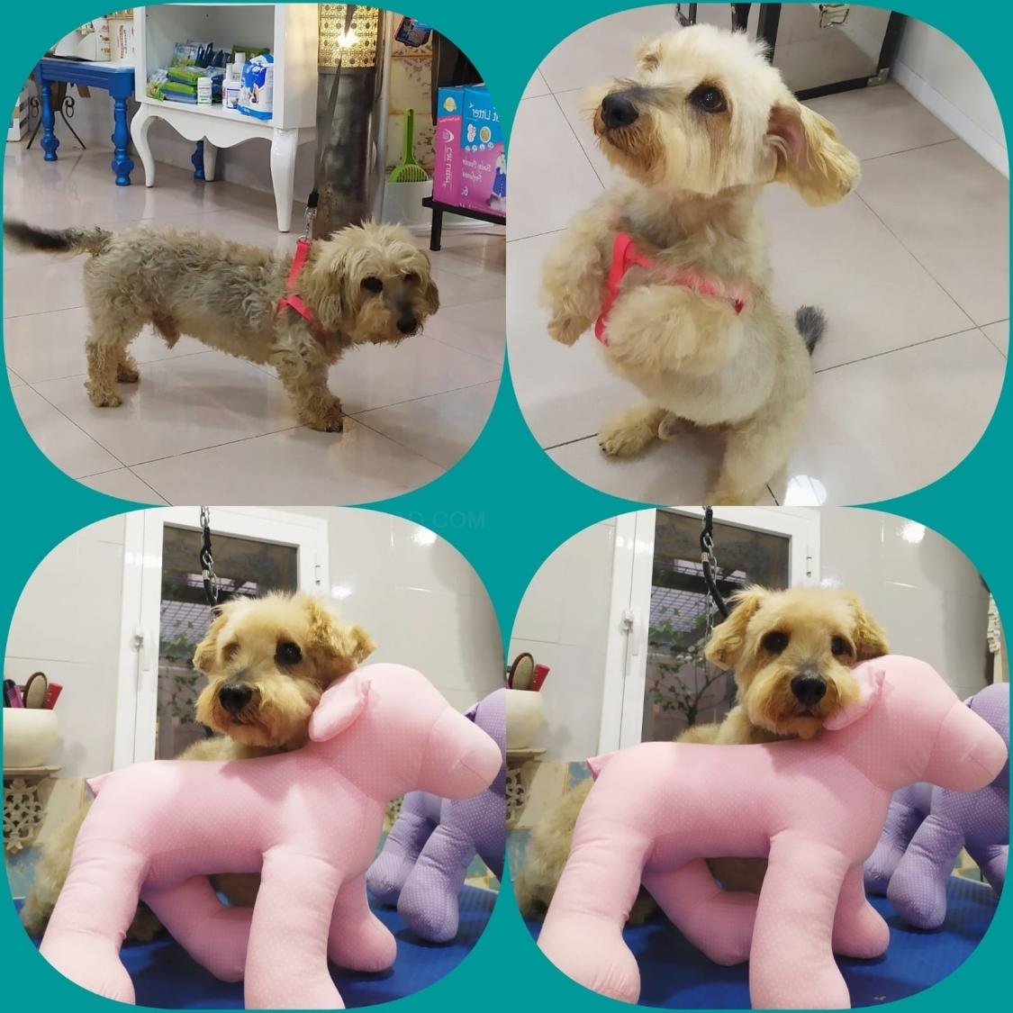 guarderías caninas