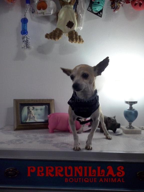 tiendas de perros