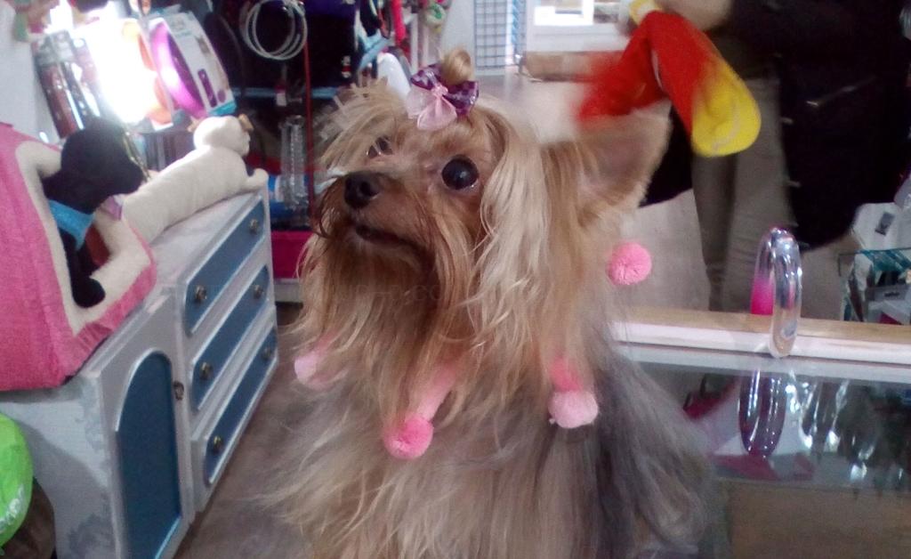 peluquerías para animales cáceres