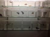 Peluqueria Felina alzira, peces alzira