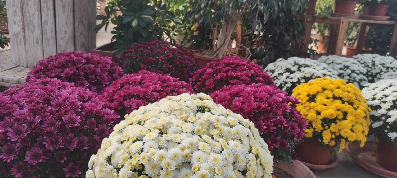Empresas de jardineria en valencia simple empresas de - Jardineria villanueva valencia ...