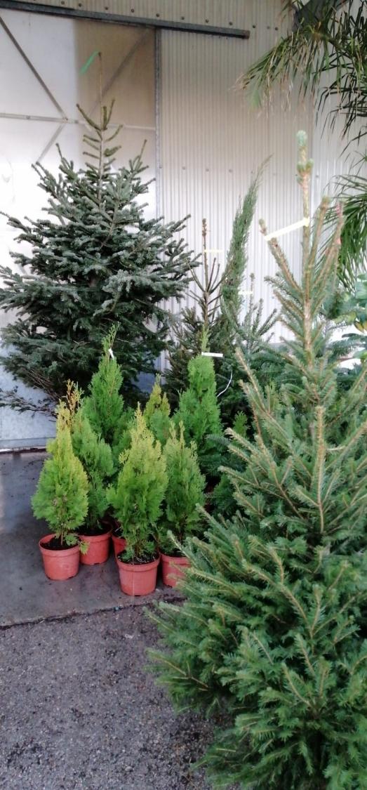 Galeria De Fotos Fotografia 2 3 Alziplant Centro De Jardineria