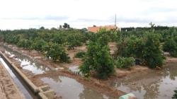 Cullera cortará caminos rurales hasta finales de abril para evitar los robos de naranjas