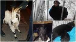 El abandono de animales exóticos y camadas de gatos satura la protectora de Paterna