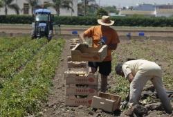 Bruselas no sabe cómo equilibrar la cadena agroalimentaria