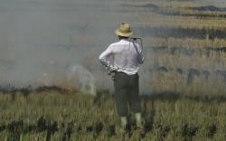 Los arroceros desobedecen al Consell y quemarán la paja del arroz sin permiso