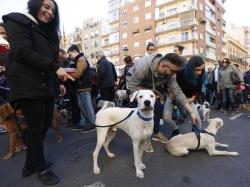 Los ayuntamientos podrán limitar el número de mascotas en las viviendas