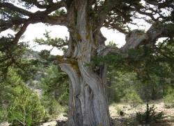 Descubre el fascinante encanto del bosque centenario de las Blancas