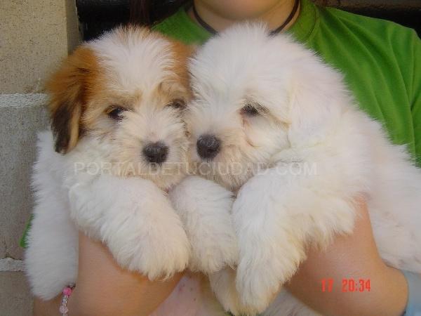Animales de compañía y accesorios, Criaderos de perros