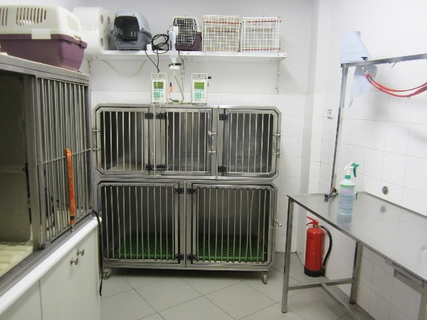 hospitalizacion perros en palencia, hospitalizacion gatos en palencia