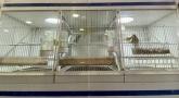 tienda de mascotas en palencia,  animales exoticos en palencia