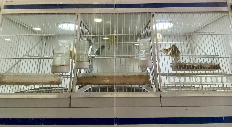 perros en palencia, gatos en palencia, loros en palencia, conejos en palencia