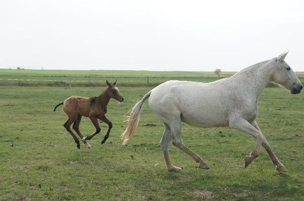 caballos en palencia