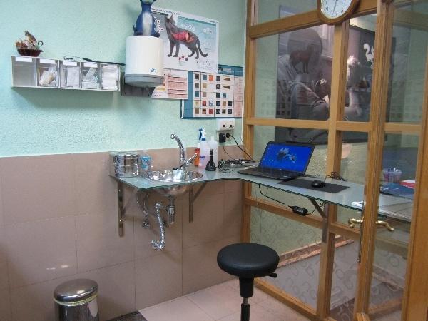 radiografia perros palencia, radiografia gatos palencia