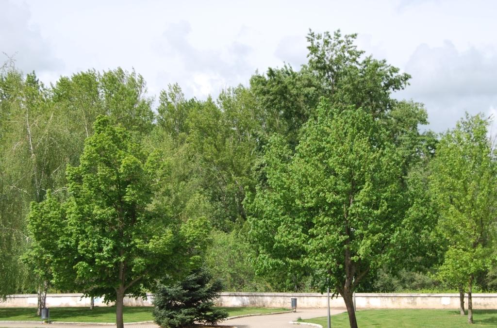 cuidado ancianos palencia, residencia amon palencia, amon palencia