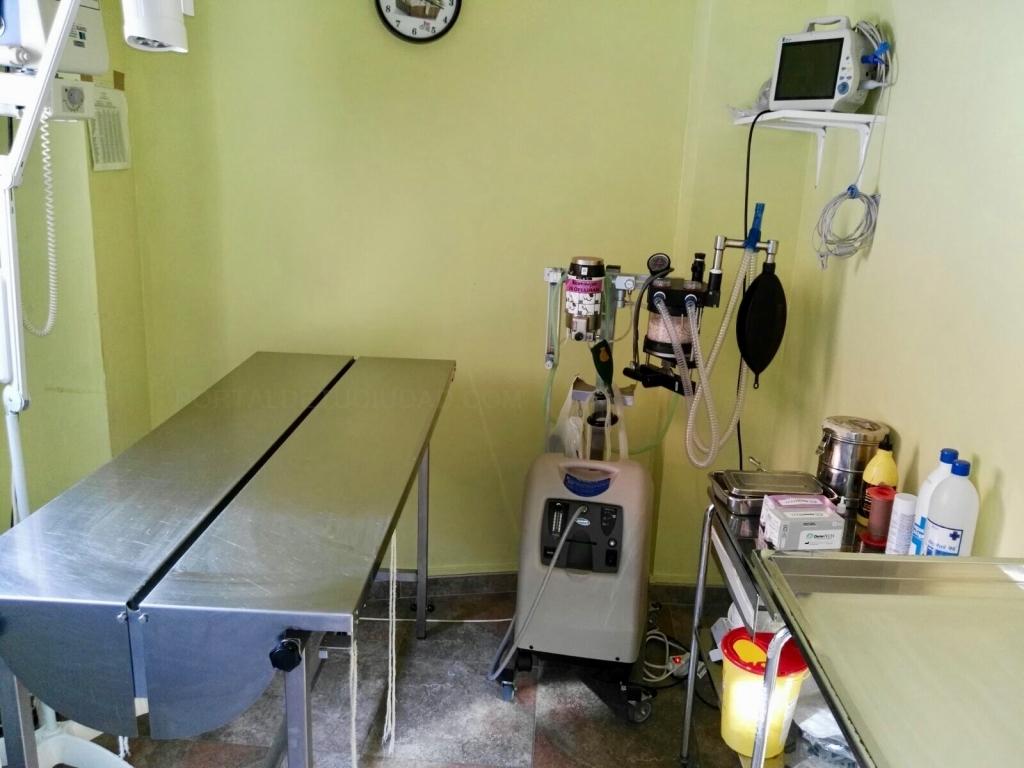 veterinarios en villamuriel de cerrato, hospital animales palencia