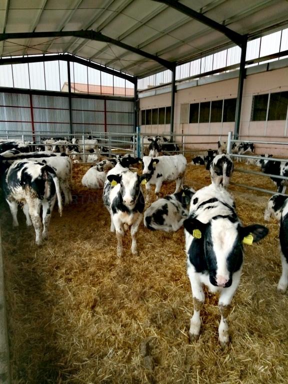despiece de ganado vacuno palencia