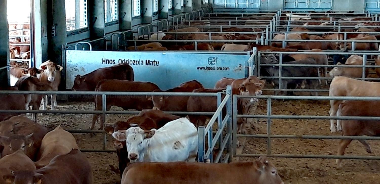 mayorista carnes en palencia