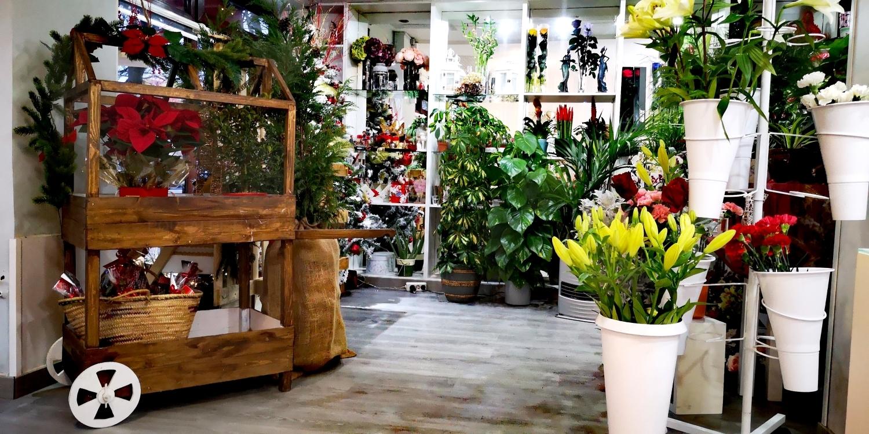 centro flores palencia