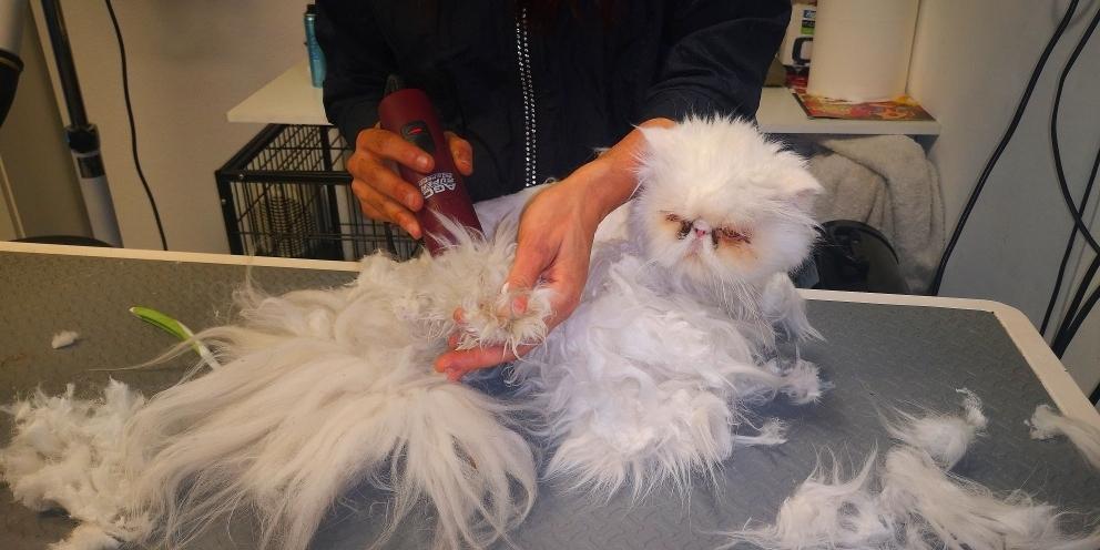peluqueria felina venta de baños