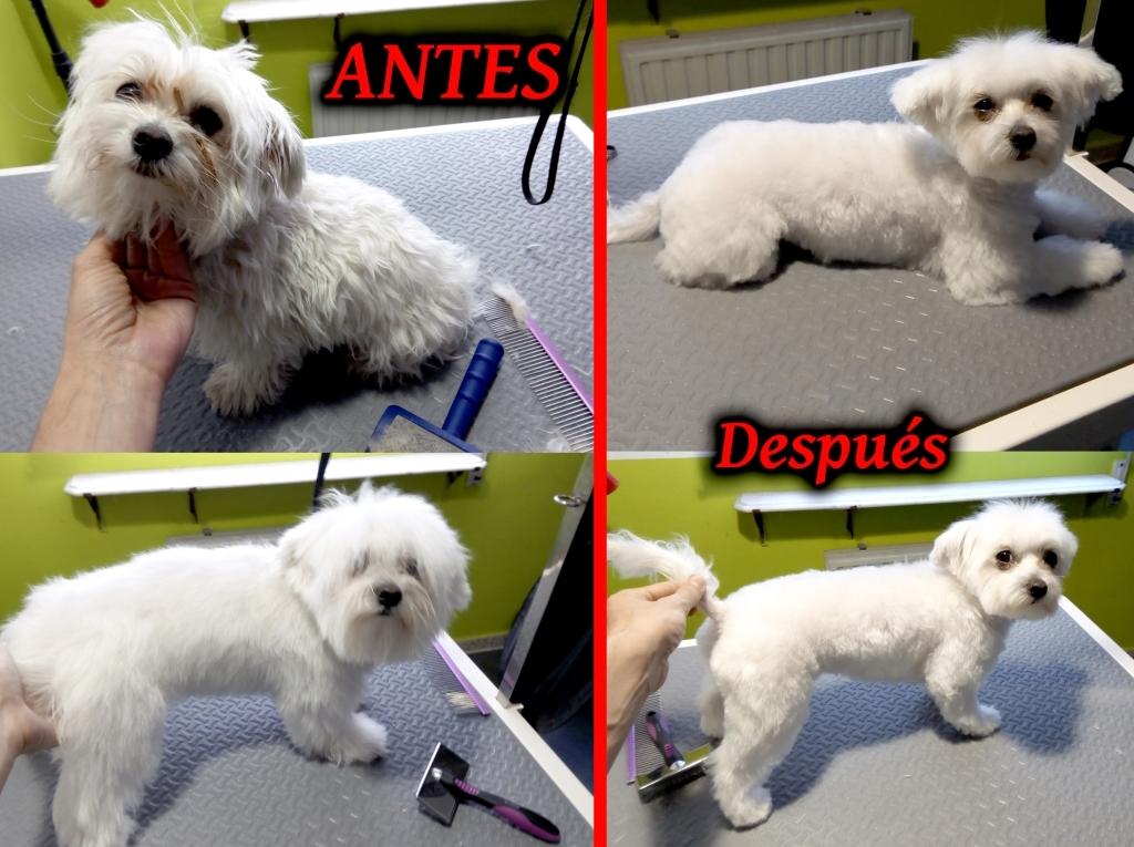 peluqueria mascotas palencia