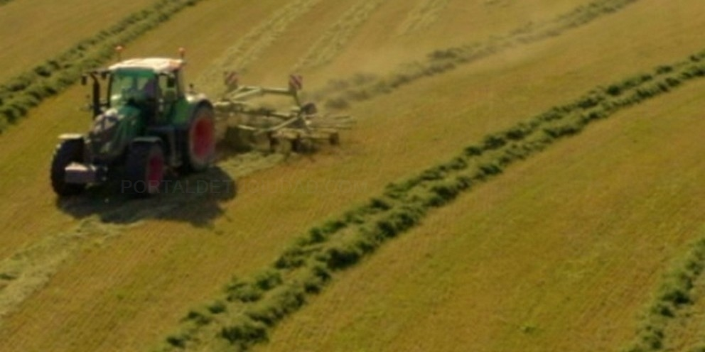 deshidrataciónde alfalfa