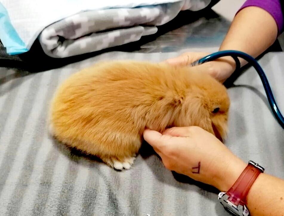 veterinario roedores palencia