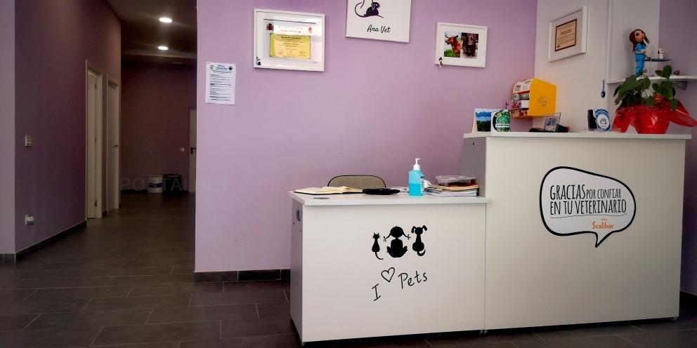 ecografias veterinarias palencia