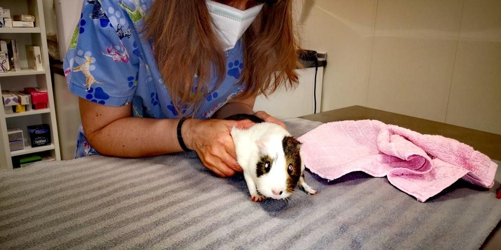 castraciones veterinarias palencia