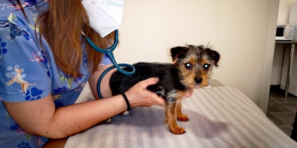 nutricion veterinaria palencia