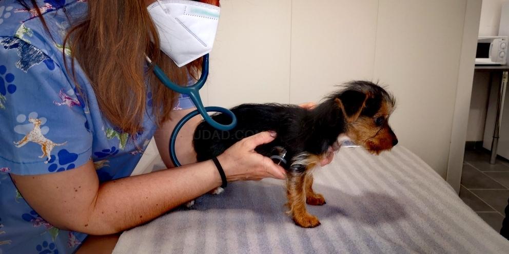 veterinarios roedores palencia