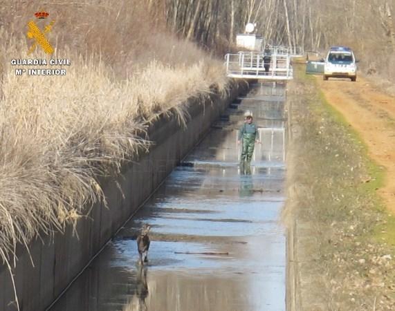La Guardia Civil rescata a un corzo y a un jabalí del interior del Canal de la Retención.
