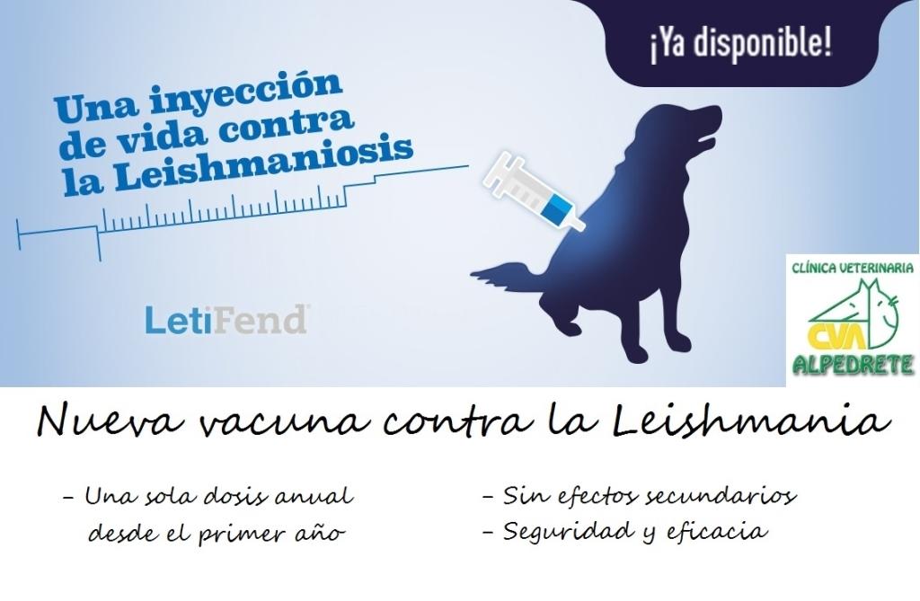 veterinarios en la sierra de madrid, clinicas veterinarias en la sierra de madrid, gratis, barato