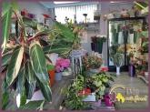 flores en torrelodones,  coronas en torrelodones,  arreglos florales en torrelodones,  ramos torrelodon