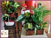 decoración de bodas,  decoración de restaurantes en la sierra de madrid,  plantas, regalar flores en alpedrete