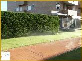 mantenimiento de jardines en galapagar,  jardineros en torrel