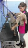 peluqueria canina en Alpedrete,  peluqueria canina en Collado Villalba,  peluqueria canina en la sierr