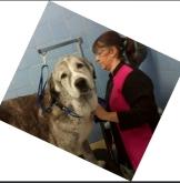 hotel para gatos en Villalba,  hotel para perros en Alpedrete,  hotel para perros en Torrelodones