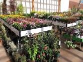 diseño de jardines en la sierra de madrid,  diseño de jardines en collado villalba