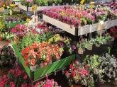 diseño de jardine, diseño de jardines en la sierra de madrid